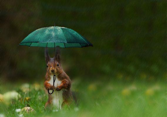 ...Ostfriesisches Eichhörnchen...