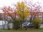 Ostfriesland im Herbst (6)