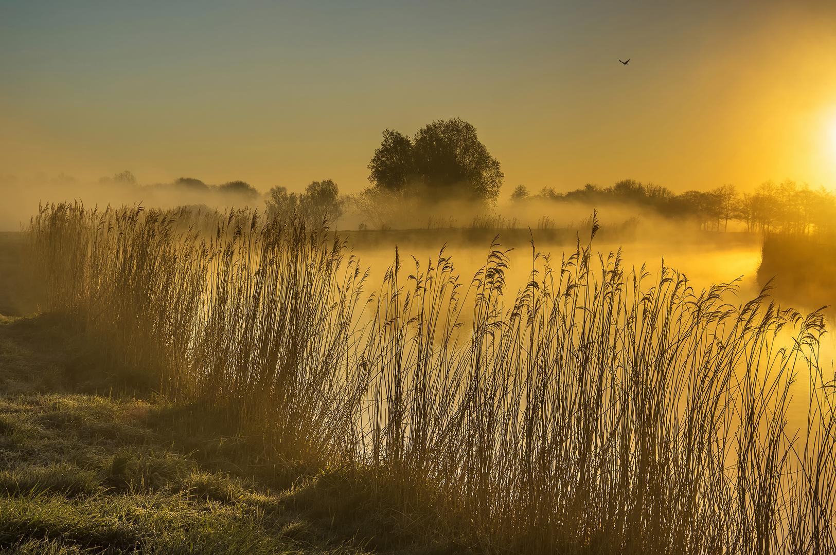 Ostfriesland - Wo das Licht erwacht #10