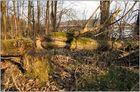 Ostpreußens Wälder bei NDR-Fernsehen