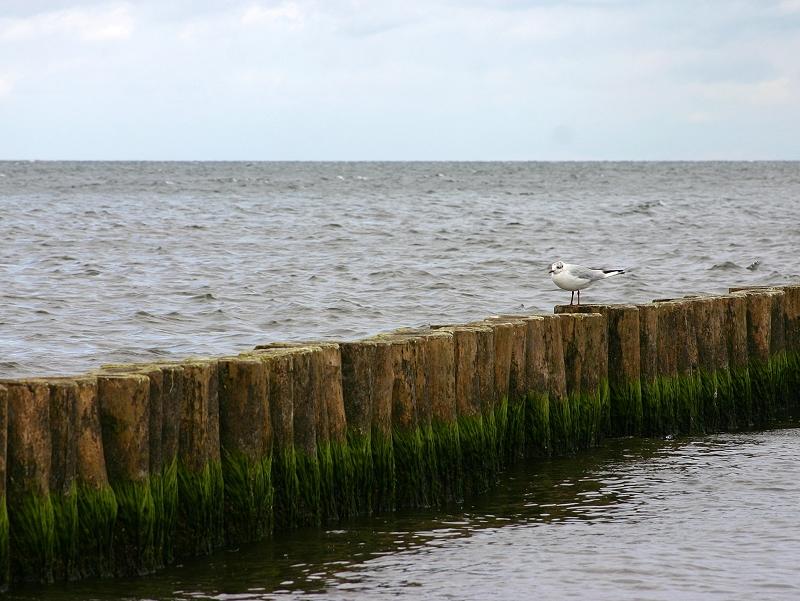 Ostsee-Impression