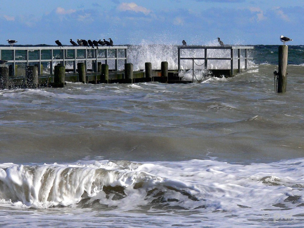 Ostsee     ---      Wasservögel im Sturm