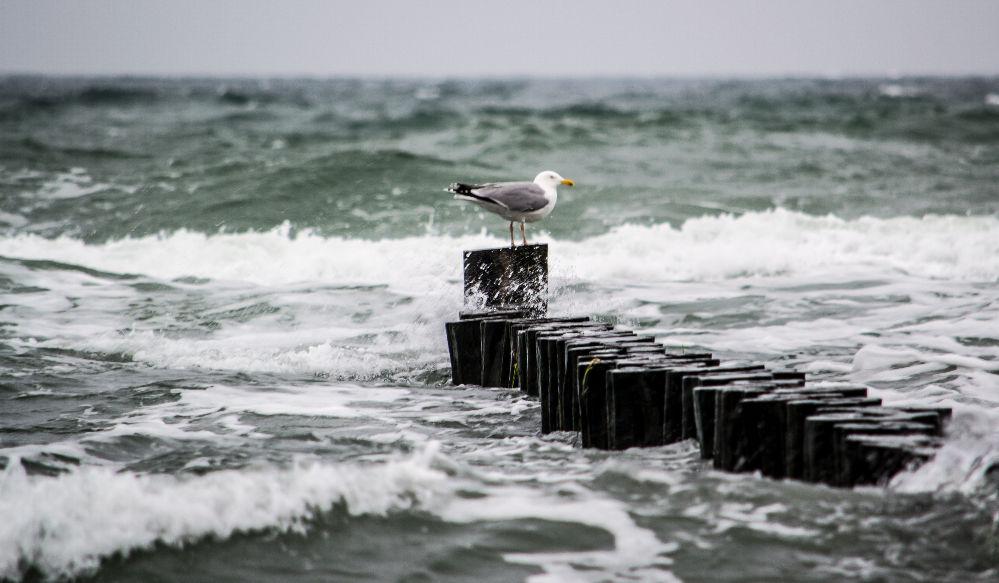 Ostseeküste bei Kühlungsborn