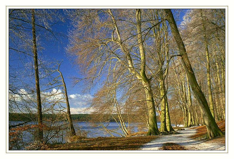 Ostufer des Werbellinsees