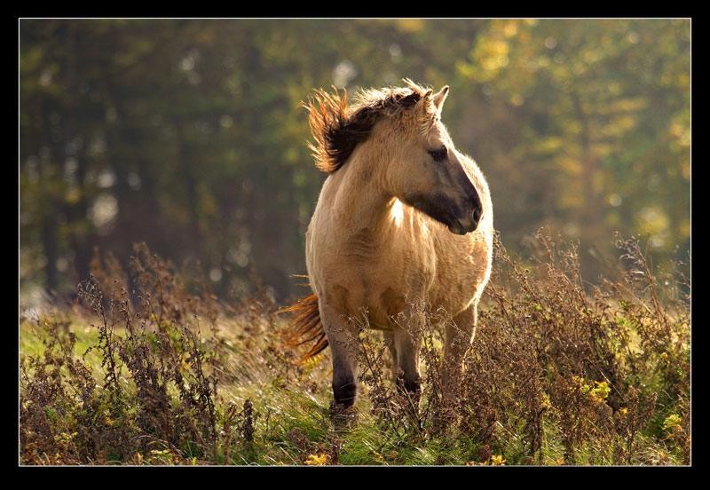 """O.T oder """"ein Pferd"""""""
