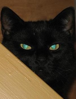 Othello mit den grünen Augen