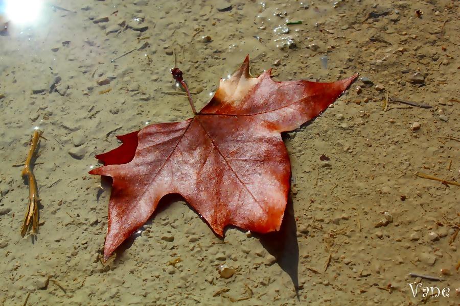 ... otoño ...