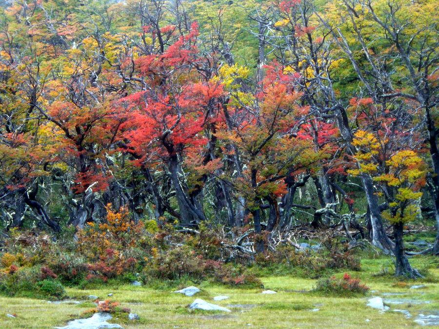 otoño con lengas...