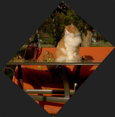 otoño de gatos