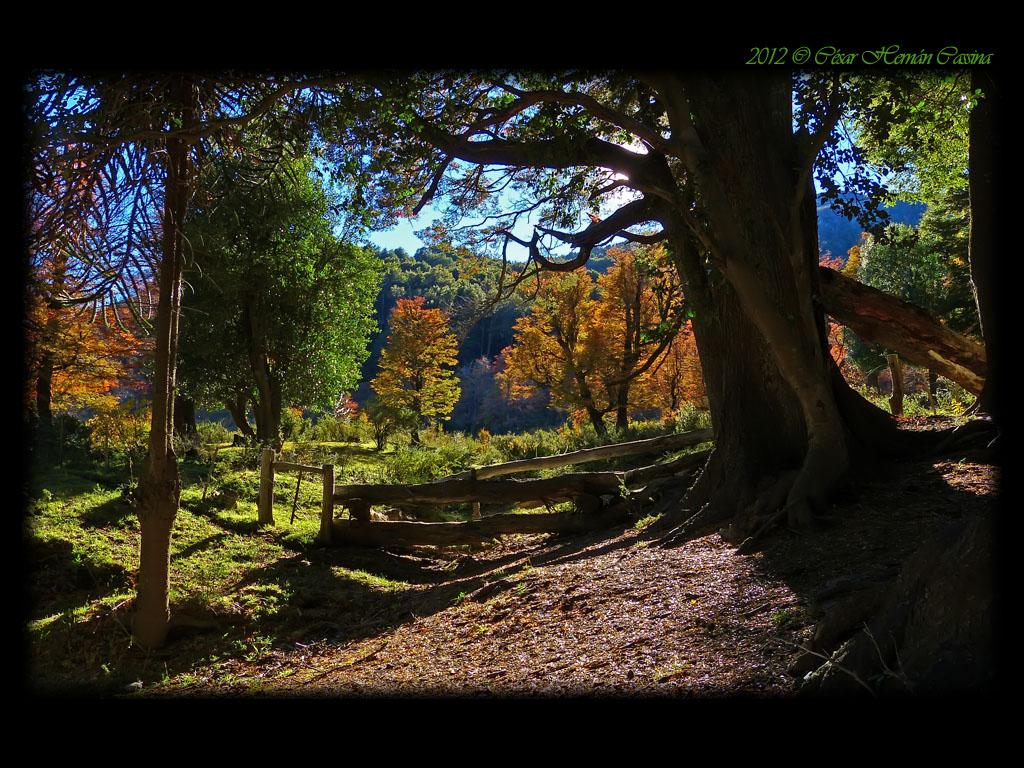 Otoño en el bosque andino