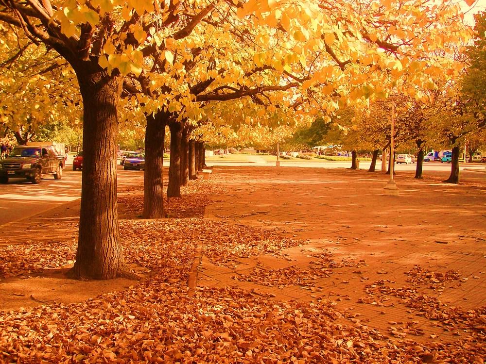 otoño en mi plaza,necochea argentina