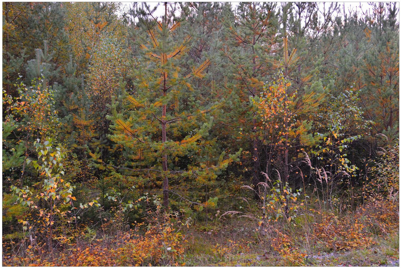 Otoño (Herbst)