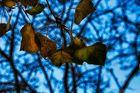 Otoño sobre Azul ( A Elisa Martin)
