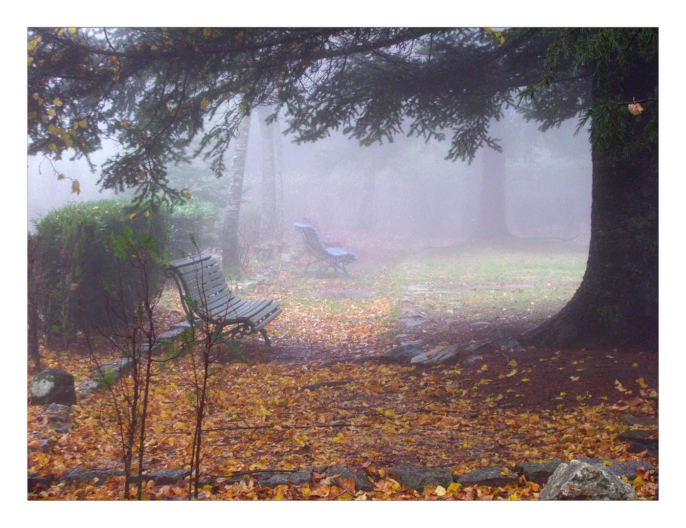 Otoño y niebla