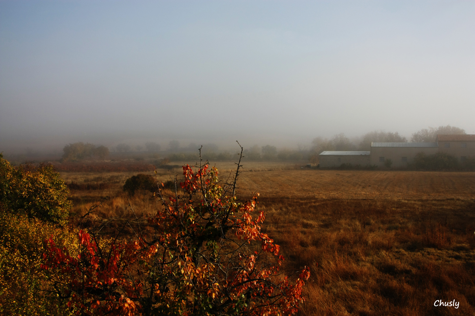 Otoño y niebla - Fall and Fog