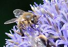 Otra abeja