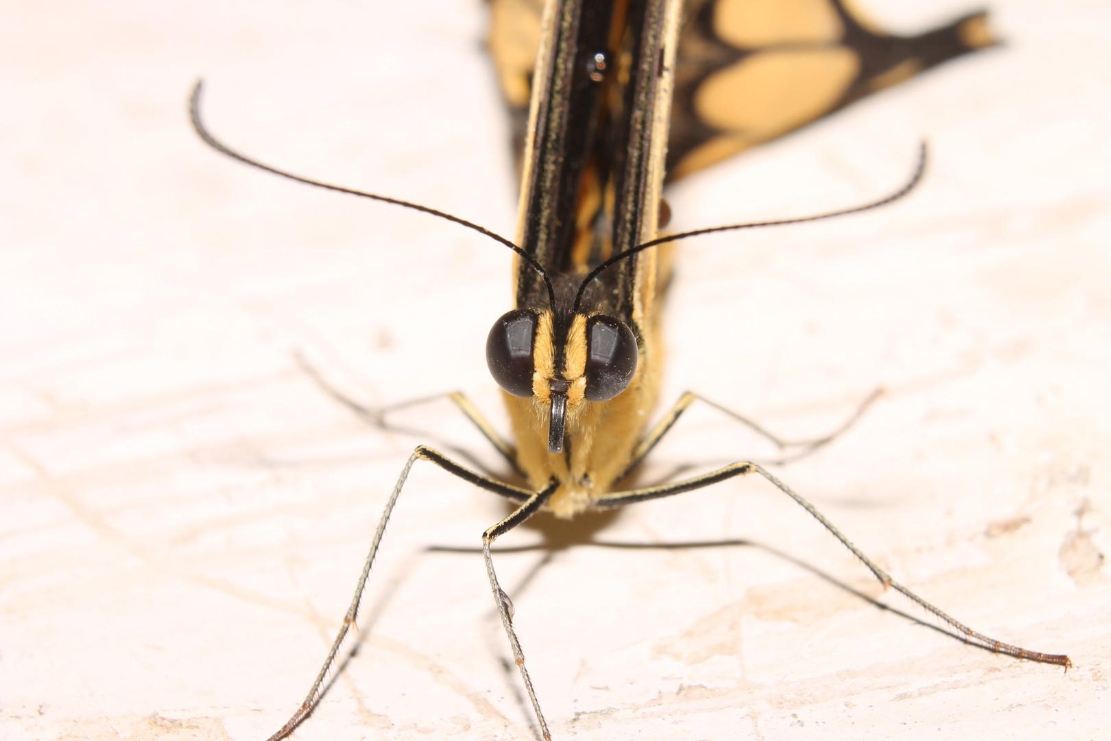 Otra foto de la mariposa