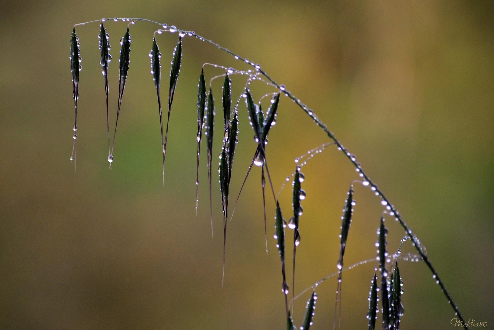 Otro dia de lluvia