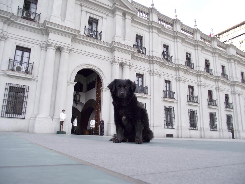 Otro Guardia de Palacio