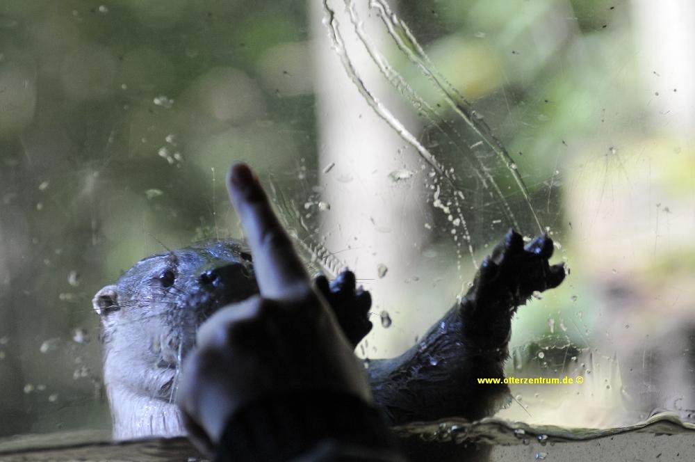 Otter 7