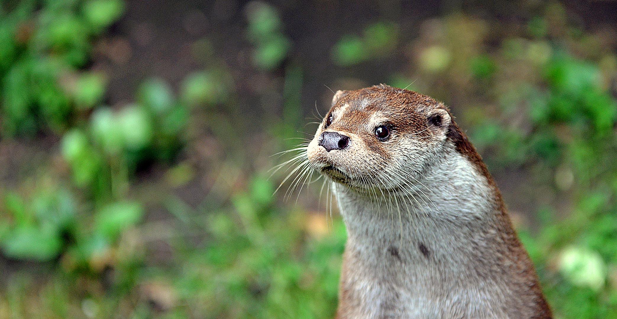 """"""" Otter """""""