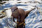 Otter (ich glaube es zumindest :-) )