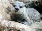 Otter im Loro Parque