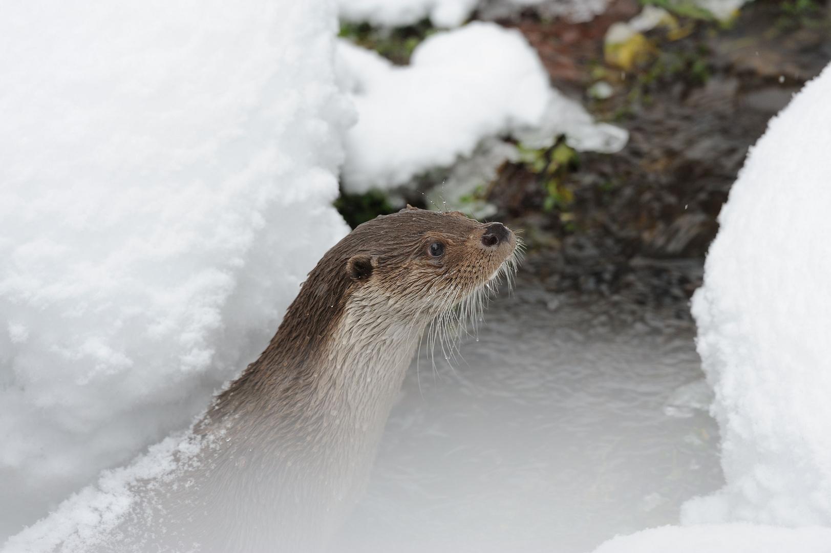 Otter NP Bay. Wald