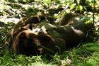 Otterdurcheinander