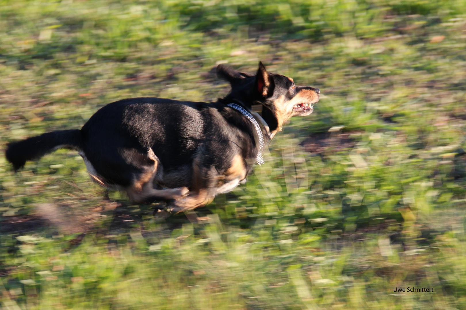 Otto auf der Jagd