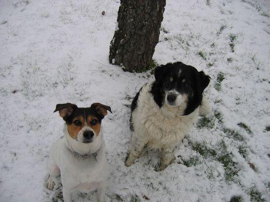 Otto und Gammel awaiting Leckerli