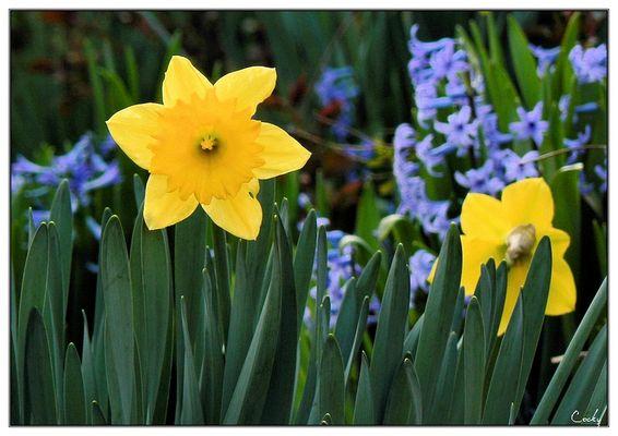 Ouf !!! enfin les couleurs du printemps