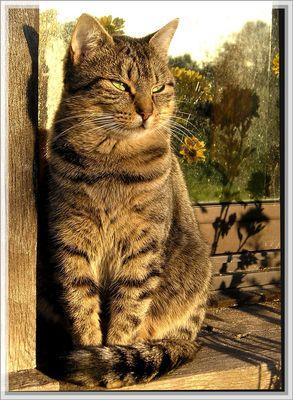 OUI j'aime les chats Chantal !