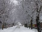 Our street