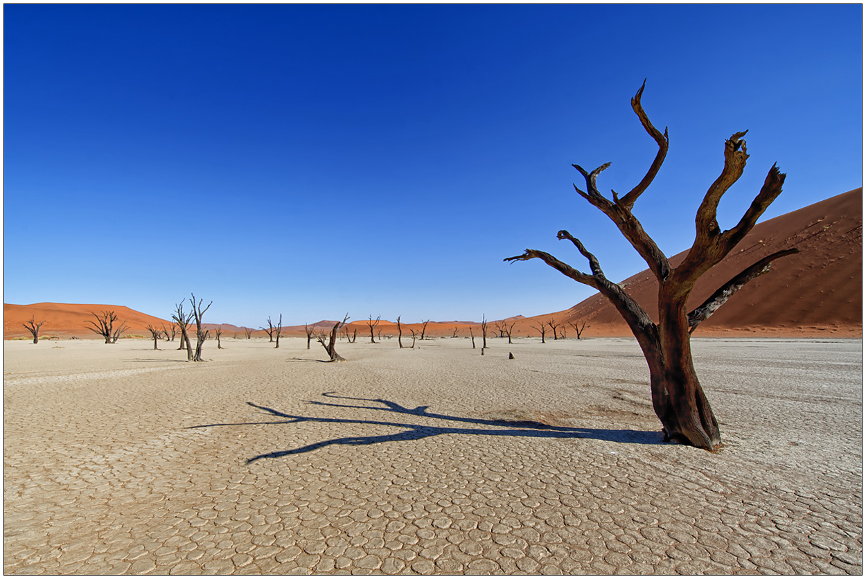 Out of Africa [15] - Dead Vlei