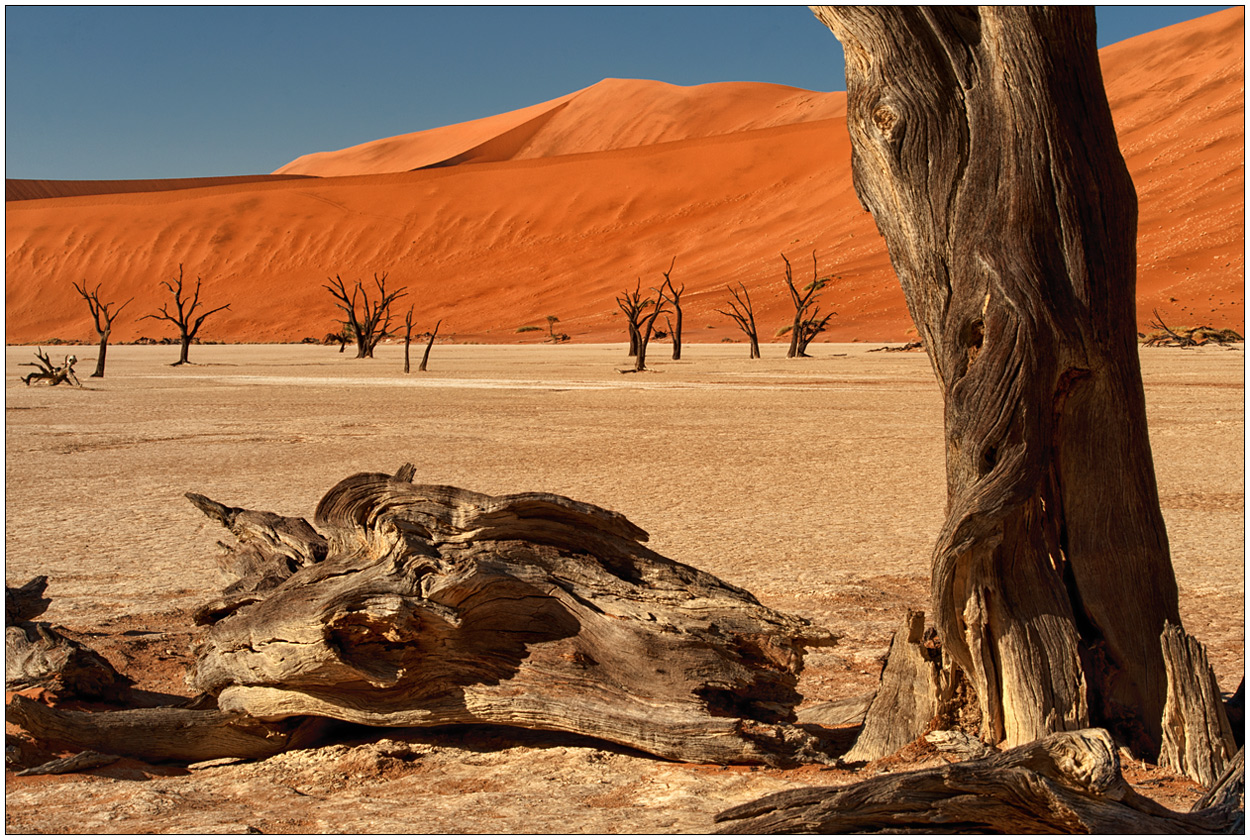 Out of Africa [6] - Dead Vlei