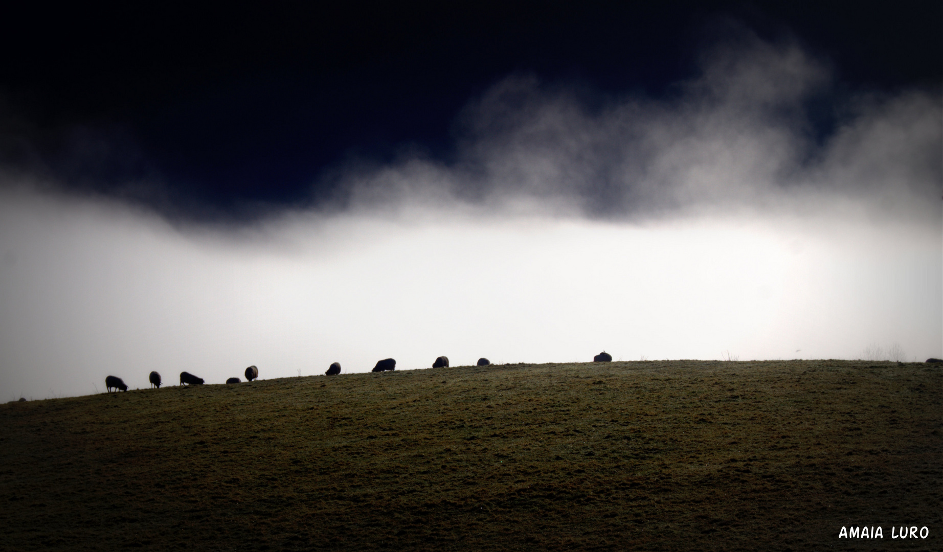 ovejas en la niebla