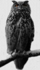 *owl*