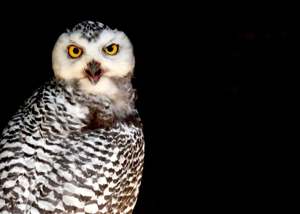 Owl eyes.... O.O