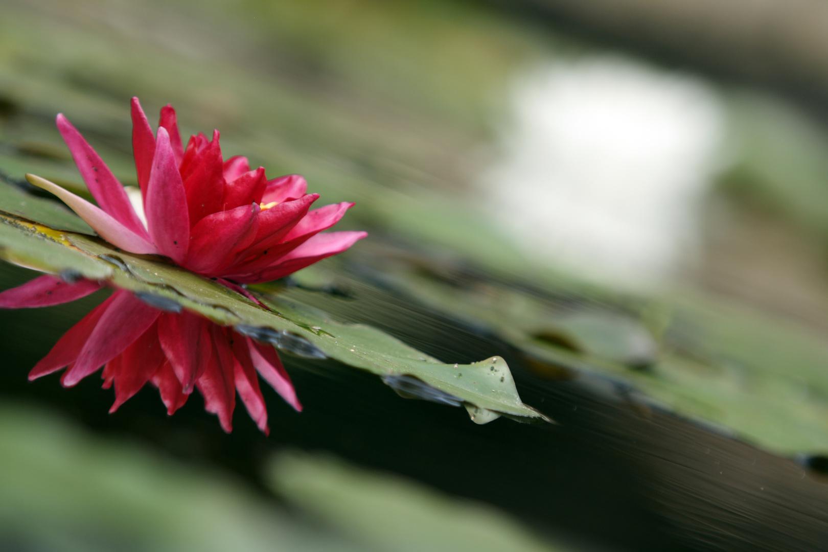 oxford botanischer garten