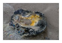Oyster Colors