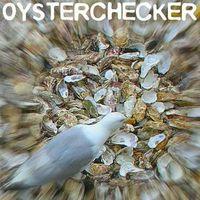 Oysterchecker