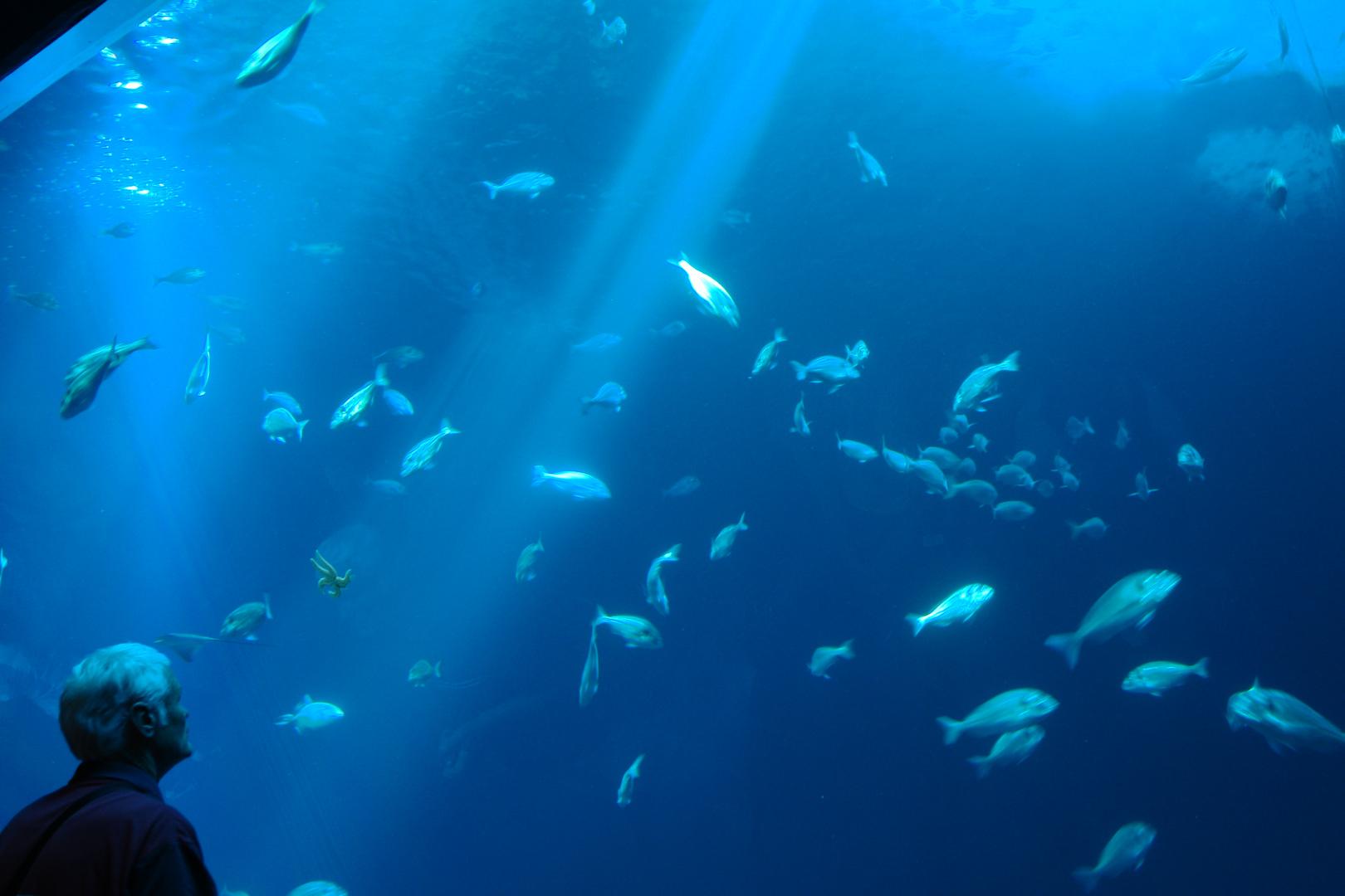 Ozeanum Stralsund