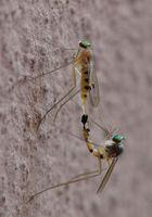 Paarung auf der Hauswand