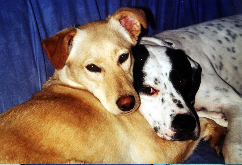Pacco & Luna