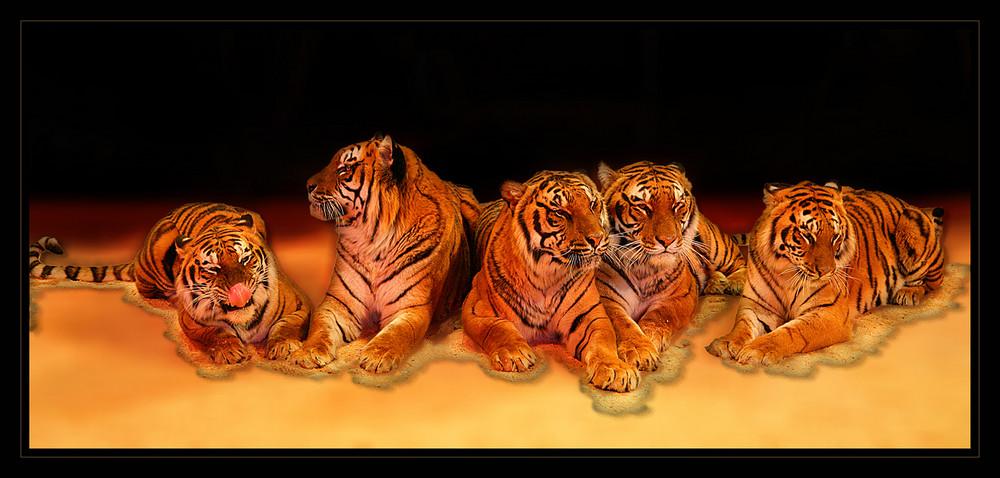 Pack' die Tiger in den Schrank!