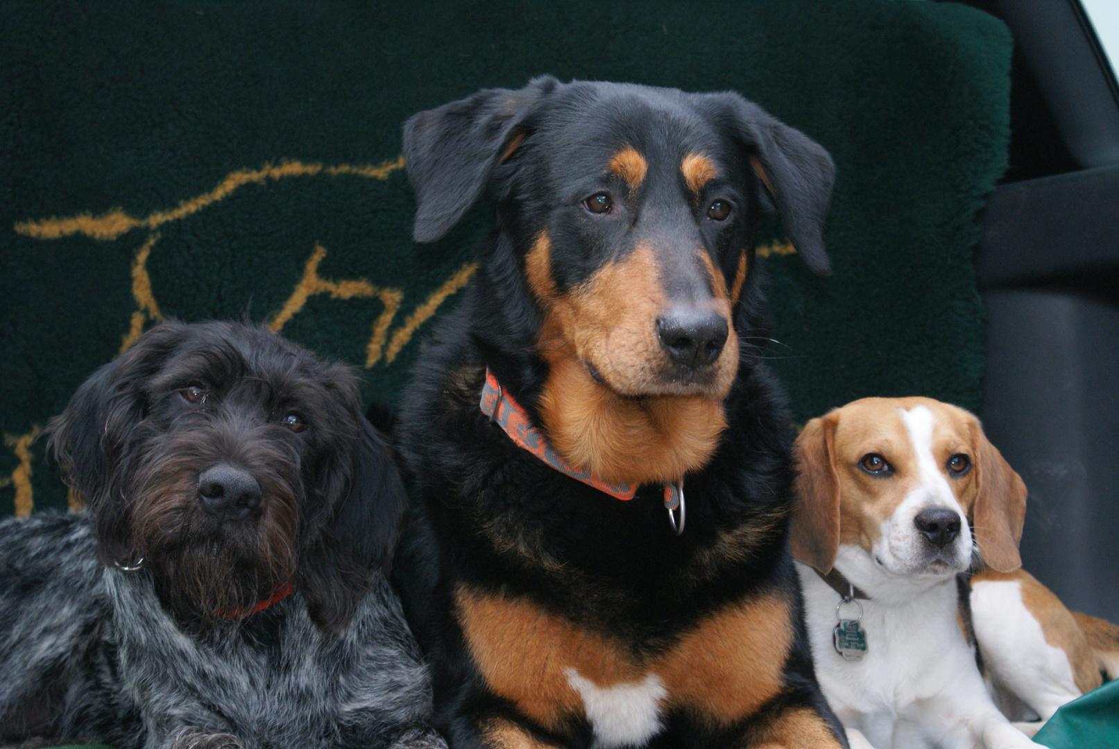 Paco & Friends