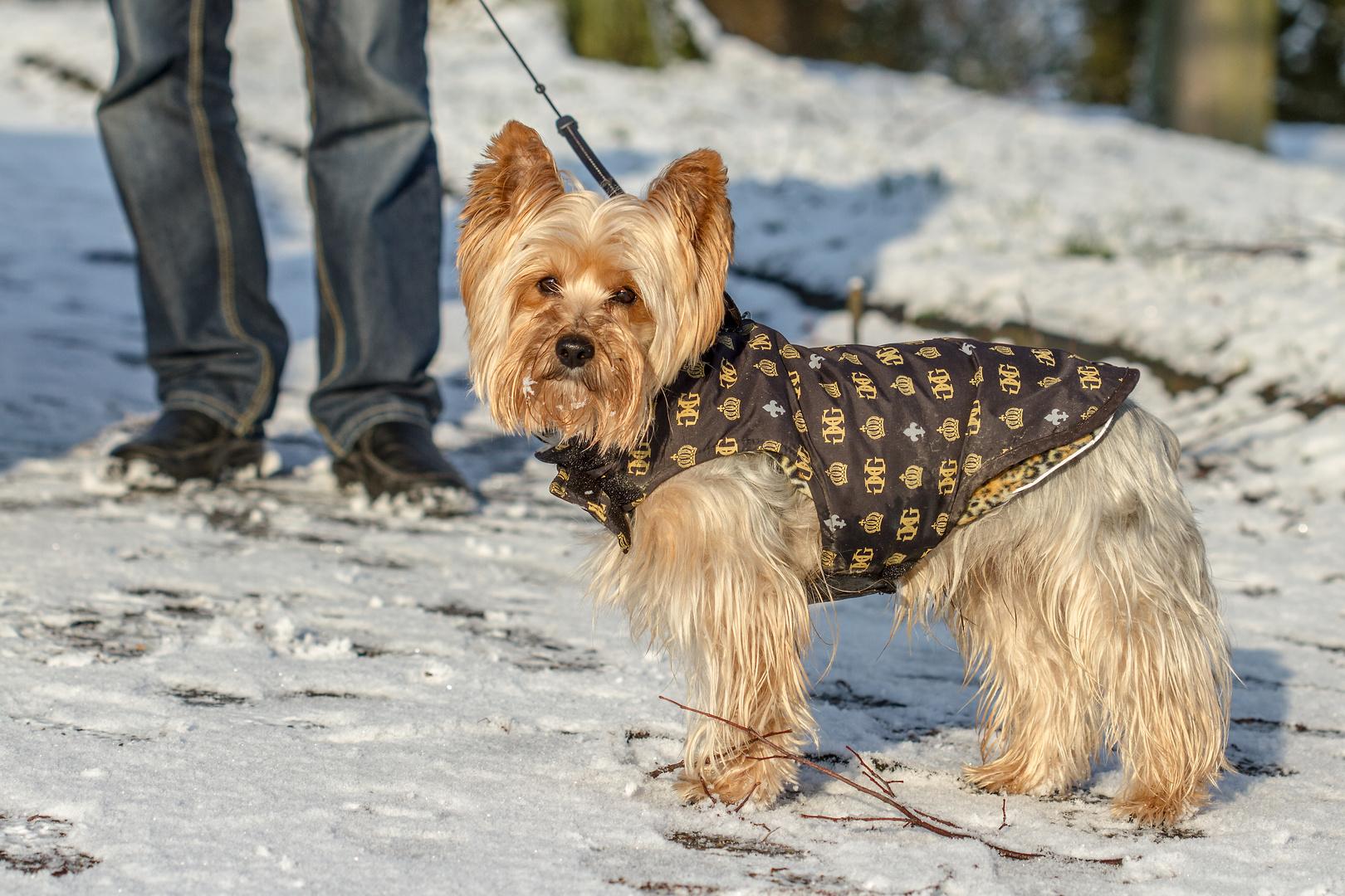 Paco in eine neue Winterjacke!!
