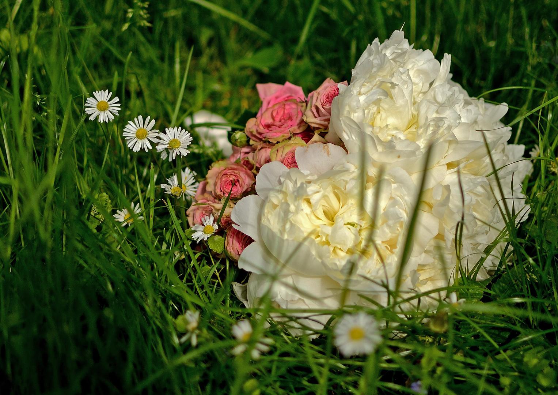 Paeonia, Rosaceae & Bellis perennis