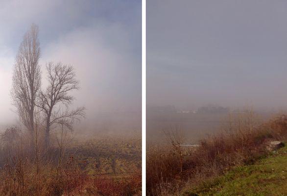 ..paesaggio con nebbia...